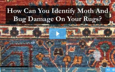 Do You Have Moths or Bugs Damaging Your Rugs?